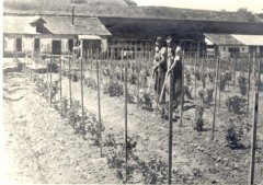 Theresienstadt, Czechoslovakia, Work in the vegetable patch, 1941-1945- 4104054360895171672.jpg